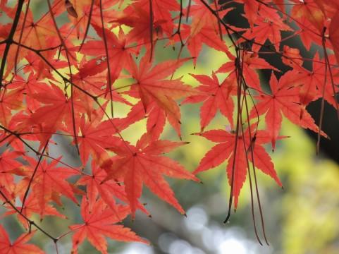 高槻・茨木の紅葉デート